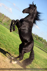 rearing black stallion 1 by venomxbaby