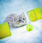 blue sepia ragdoll kitten