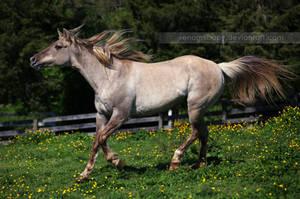 silver grulla mare 3 by venomxbaby