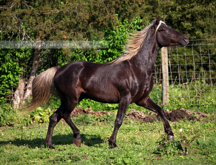 silver dapple stallion 3 by venomxbaby