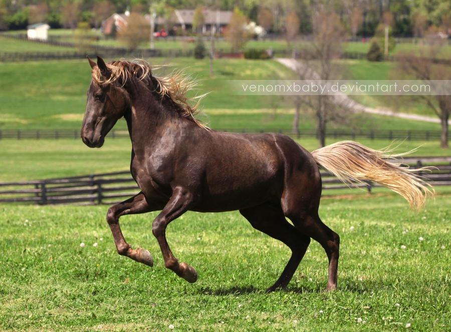 rocky mountain horse rearing by venomxbaby