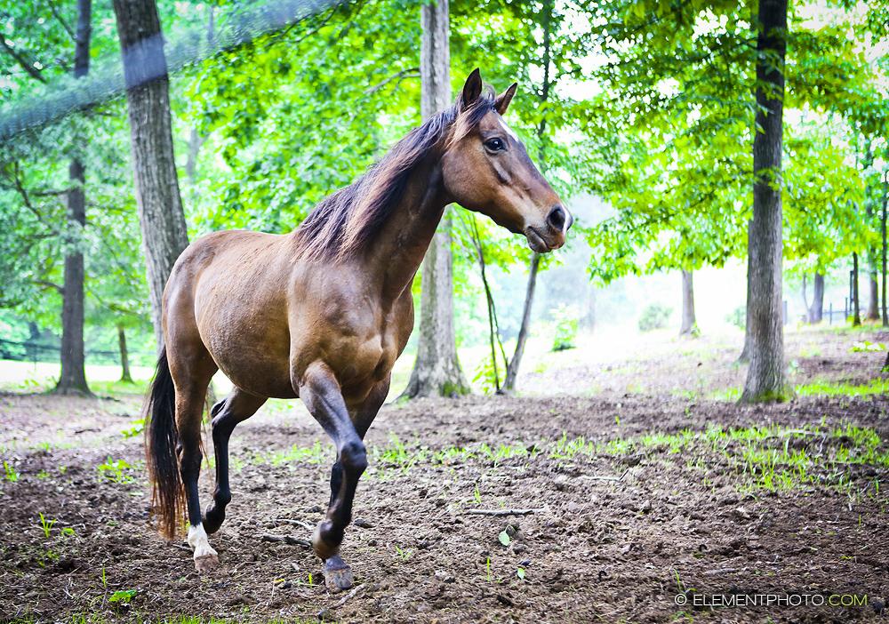 Bay Horse in Forest by venomxbaby