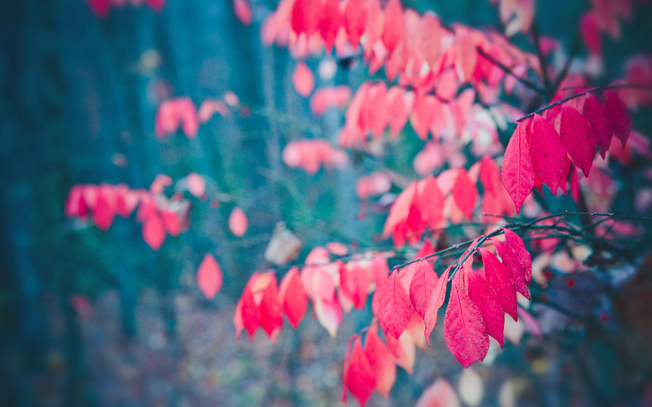 twilight red leaves wallpaper by venomxbaby
