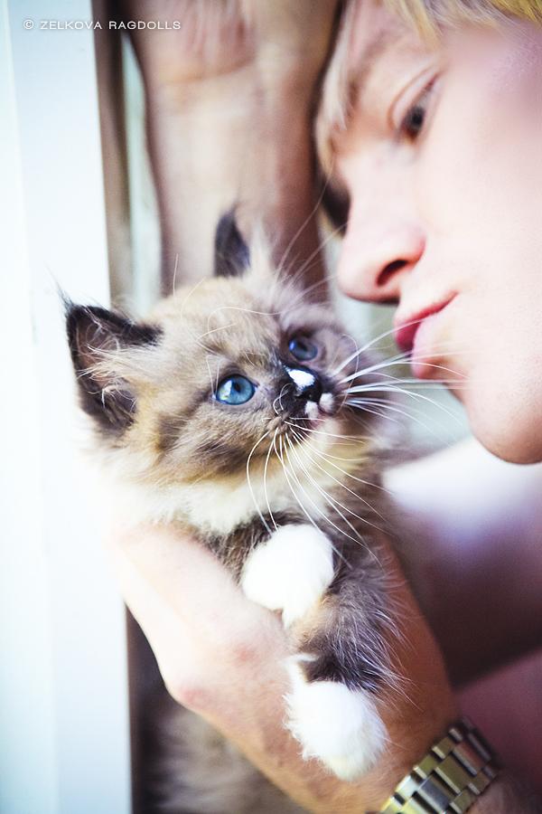 real men love cats 2 by venomxbaby
