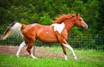 chestnut tobiano paint horse