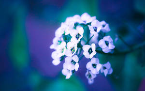 violet flowers wallpaper HD by venomxbaby
