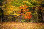 colorful fall leaves stock