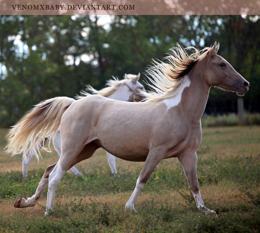 Gold Champagne Horse Classic Champagne Horse 1 by