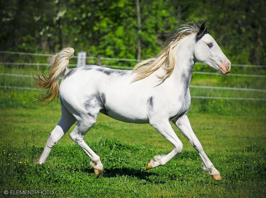 Black And White Paint Breyer Horse