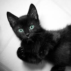 cute black kitten by venomxbaby