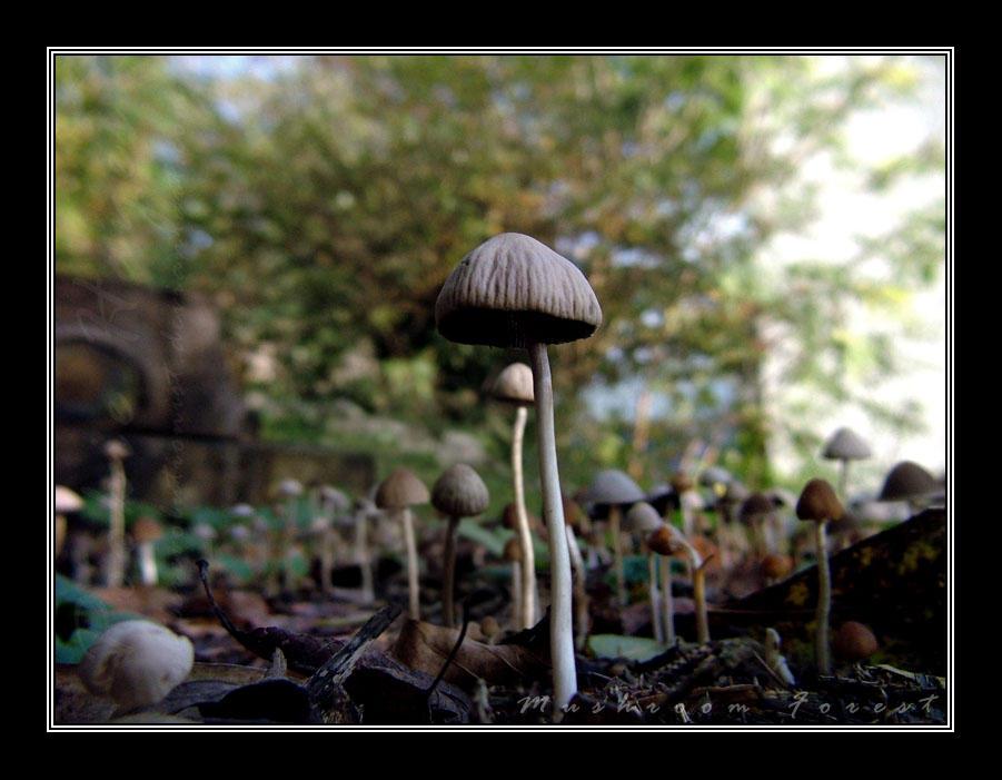 Mushroom Forest by Subtlerevolutionist