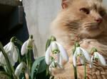 annoying cat :P