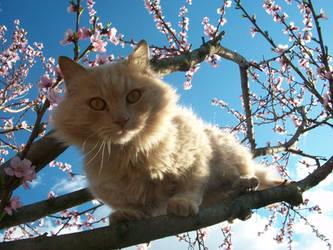 Toto- annoying cat 2 by croatian-artist-girl
