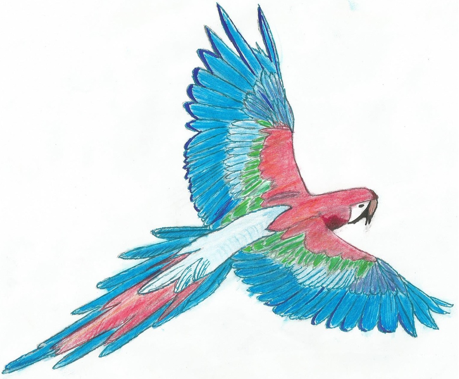 Uncategorized Drawing Of A Parrot drawing of a parrot by 3dphantom on deviantart 3dphantom