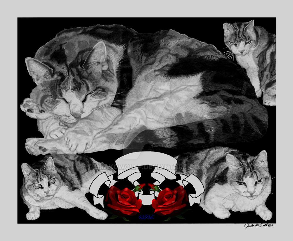 Chucky (Chokoloskee) Cat-Digital Roses Color by DrakoWolff