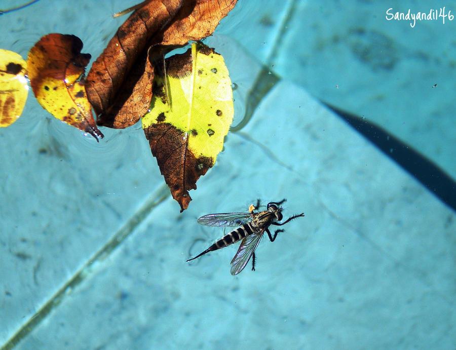 Water Bug by sandyandi146