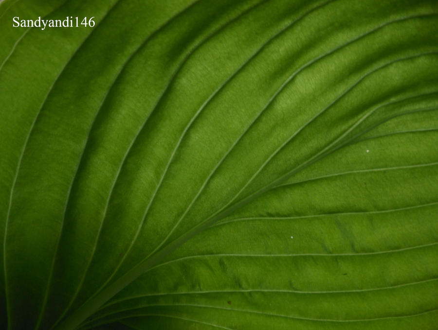 Photography Assignment 1: Pattern- leaf by sandyandi146