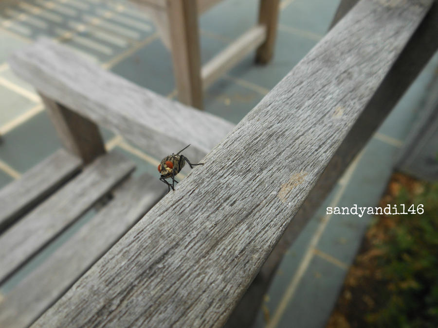 Project 365, Day 113: Shoo Fly by sandyandi146