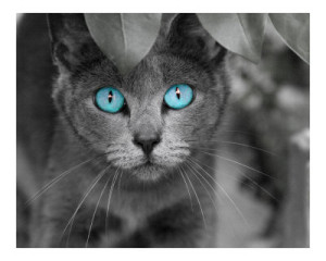 Luminairus's Profile Picture