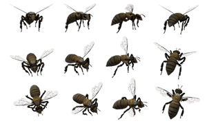 Bee Set 04 by Free-Stock-By-Wayne