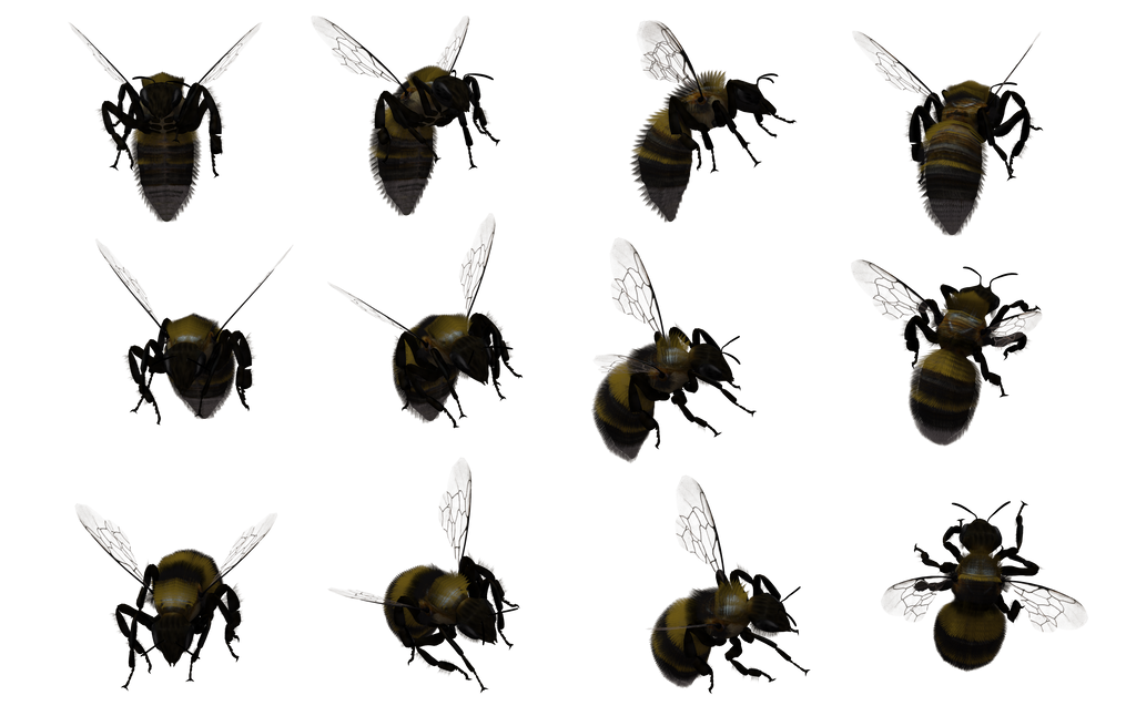 Bumble Bee Set 02 by Free-Stock-By-Wayne