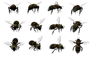 Bumble Bee Set 04 by Free-Stock-By-Wayne