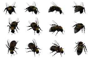 Bumble Bee Set 05 by Free-Stock-By-Wayne