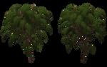 Sumac Tree 02