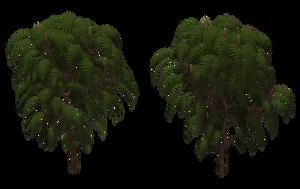Sumac Tree 03 by Free-Stock-By-Wayne