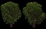 Sumac Tree 03