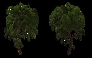 Sumac Tree 04 by Free-Stock-By-Wayne