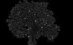 Tree 07