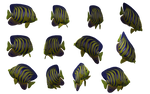 Fish Set 01