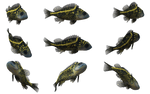 Fish Set 13