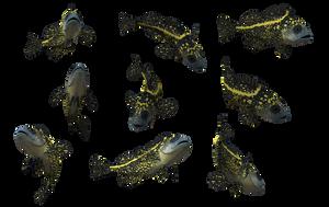 Fish Set 14 by Free-Stock-By-Wayne