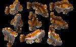 Fish Set 18