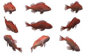 Fish Set 25 by Free-Stock-By-Wayne