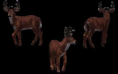 Deer - Buck 02
