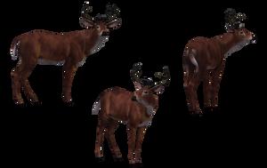 Deer - Buck 03 by Free-Stock-By-Wayne