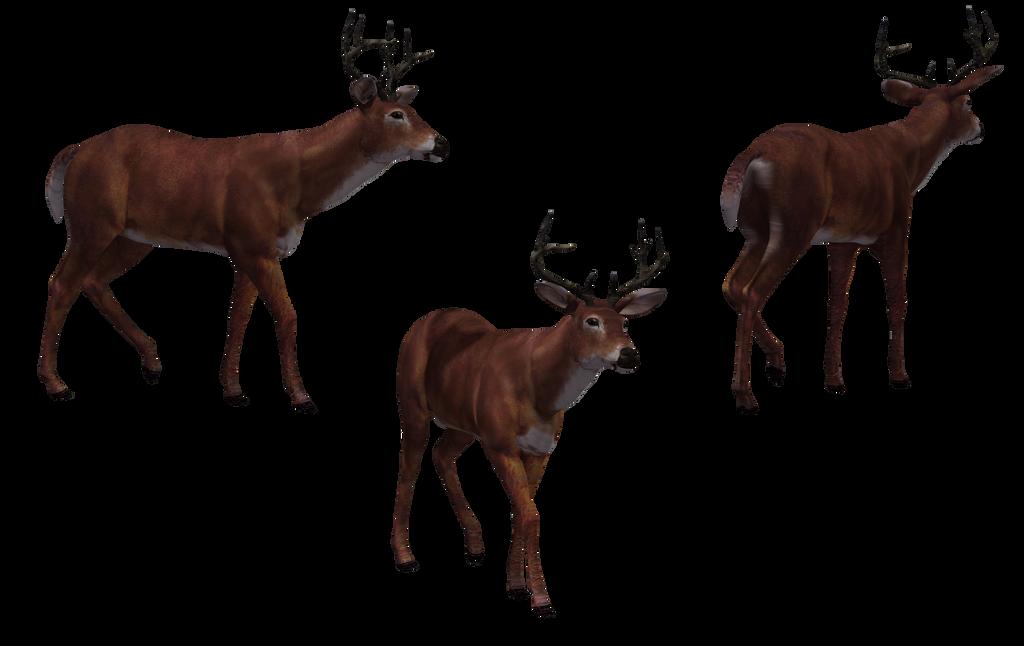 Deer - Buck 06