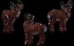 Deer - Buck 07