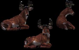 Deer - Buck 09 by Free-Stock-By-Wayne