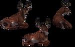 Deer - Buck 09