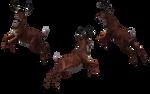 Deer - Buck 10