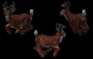 Deer - Buck 11 by Free-Stock-By-Wayne