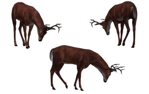 Deer - Buck 12 by Free-Stock-By-Wayne