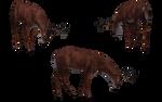 Deer - Buck 12
