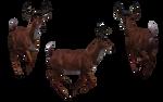 Deer - Buck 13