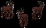 Deer - Buck 14