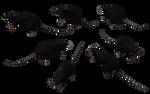 Black Rat Set 04